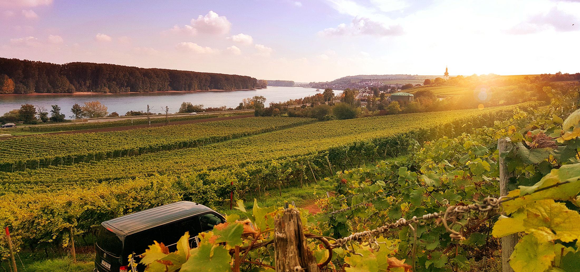Blick über Hipping auf den Rhein